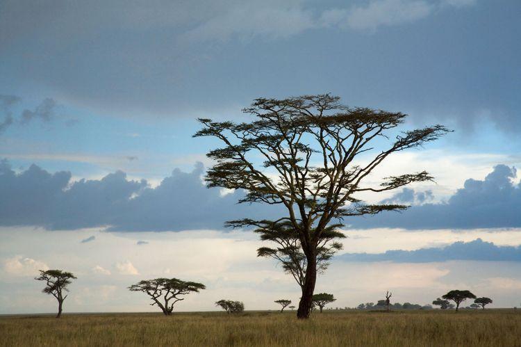 Africa, Tanzania, Serengeti National Park, view of savannah landscape