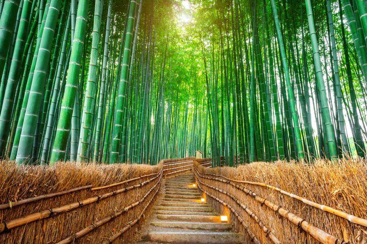 Arashiyama Bamboo Grove, Japan © Guitar photographer/Shutterstock