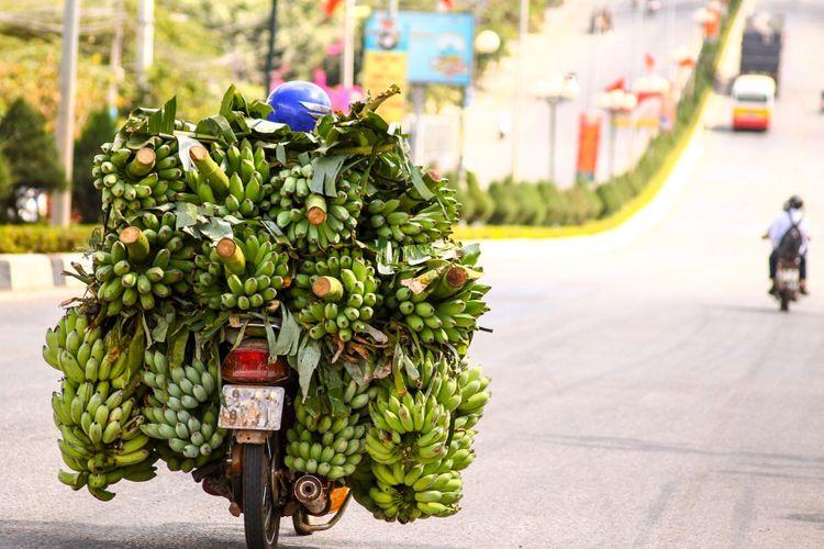 Bananas-Vietnam-by-motorbike
