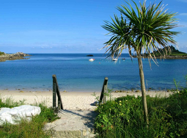 Tropical vibes with all trees and blue waters on St Mary's, the Isles of Scilly, Cornwall © Shutterstock