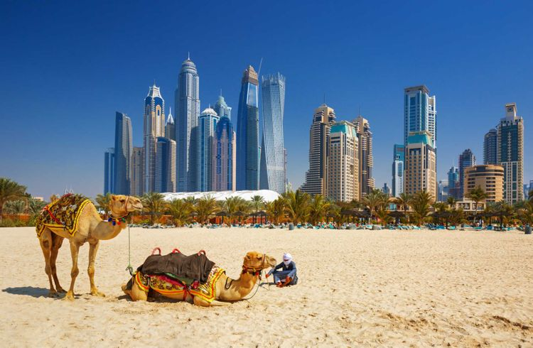Camels at the beach in front of Dubai city line, United Arab Emirates © Rasto SK/Shutterstock