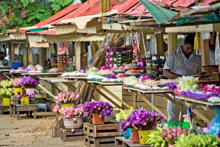 Central Province, Flowers for Offering, Kandy, Sri Lanka