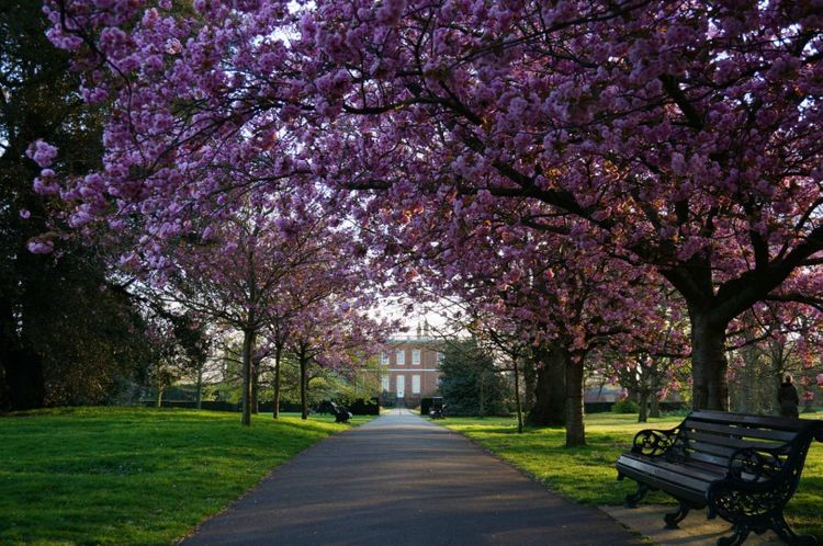 cherry-blossom-greenwich-park-london-england-uk-shutterstock_643590337