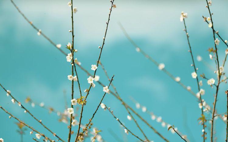 cherry-blossom-spring-shutterstock_782154349