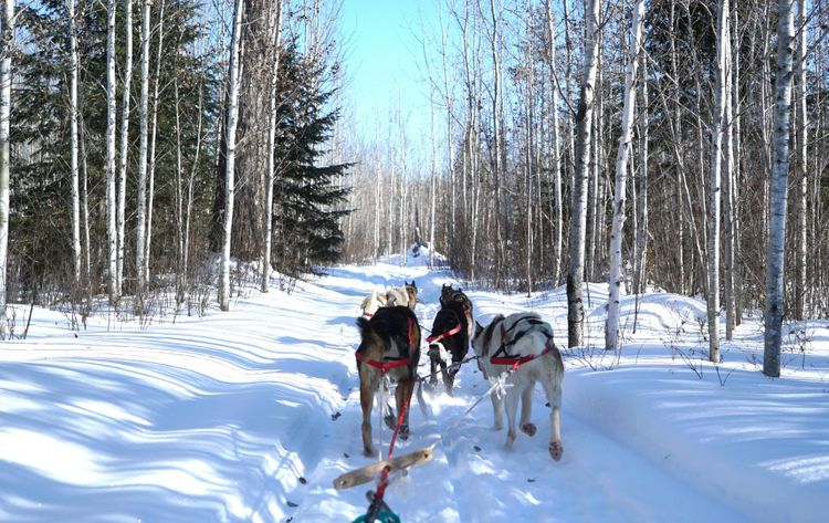 Dog sledding, Gunflint area, Minnesota, USA