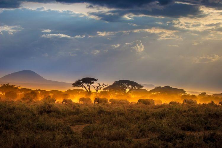 elephants-africa-shutterstock_705848284