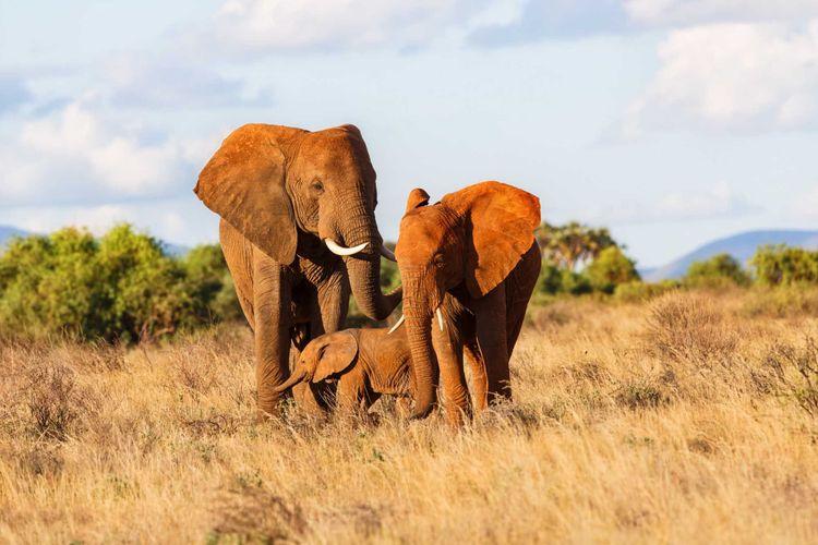Elephant family in Samburu National Reserve, Kenya