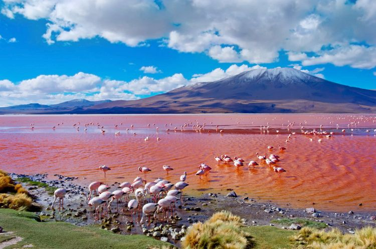 Beautiful aerial view of Laguna Colorada or Red Lake, a shallow salt lake in the southwest of the Altiplano of Bolivia