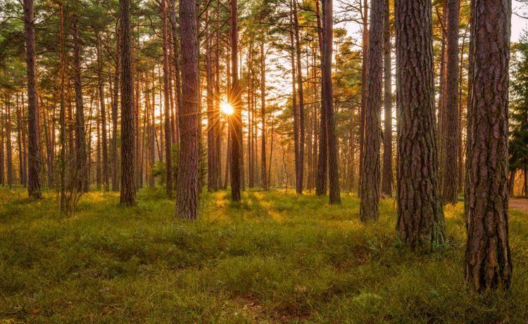 forest-sunset-estonia-shutterstock_631182350