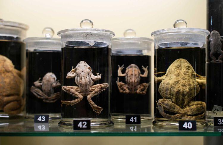 frog-jar-museum-shutterstock_1286066359