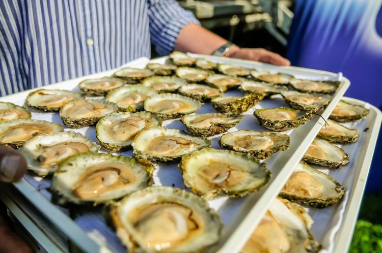 Galway oysters at the International Oyster Festival