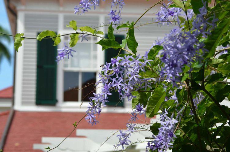 gardens-edison-winter-estate-florida-shutterstock_427341841