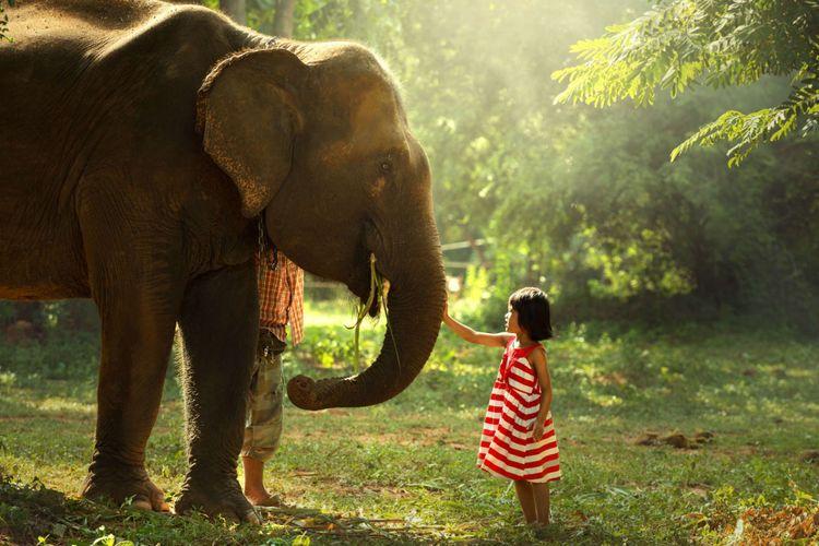 girl-elephant-shutterstock_570900523