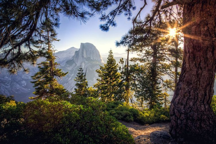 Sunrise on Half Dome in the Forest, Yosemite National Park, California ©  Stephen Moehle/Shutterstock