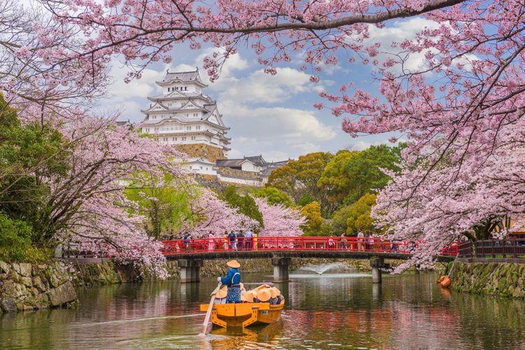 Japan, Osaka sakura - cherry blossom