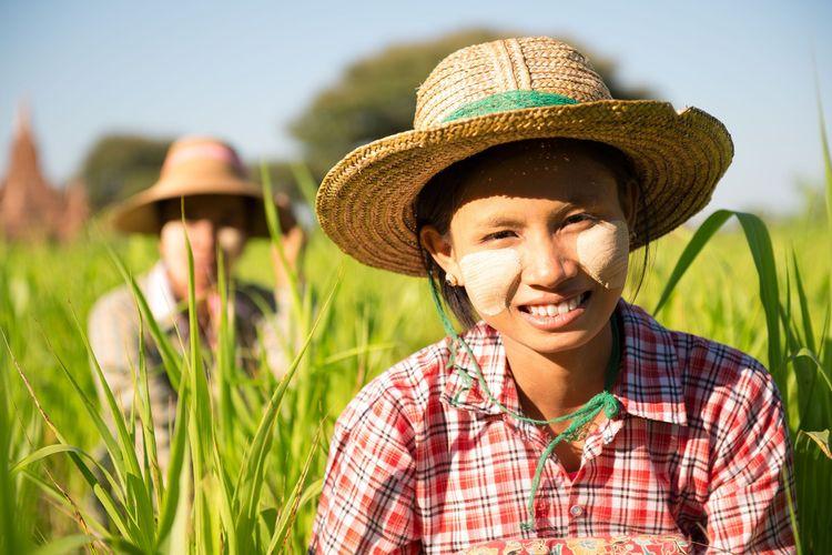Myanmar Asian traditional farmer planting, harvesting in field © szefei/Shutterstock