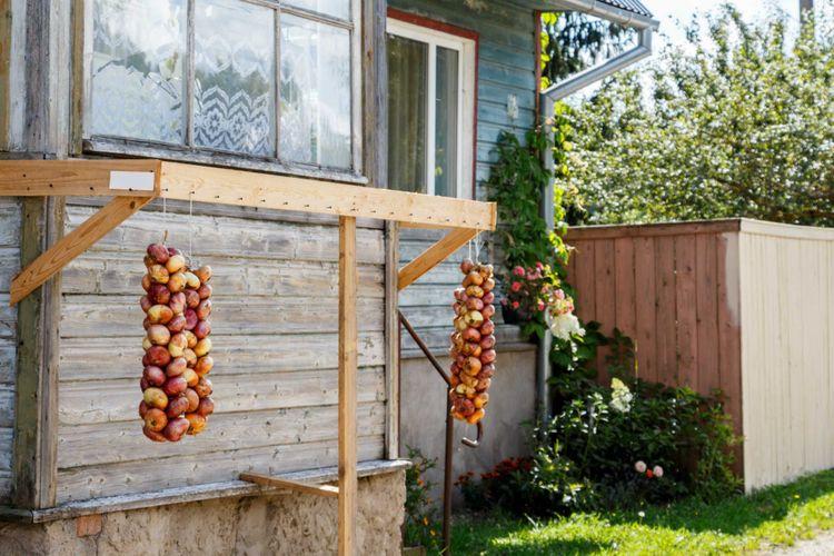 onions-old-believers-peipsi-estonia-shutterstock_707312872
