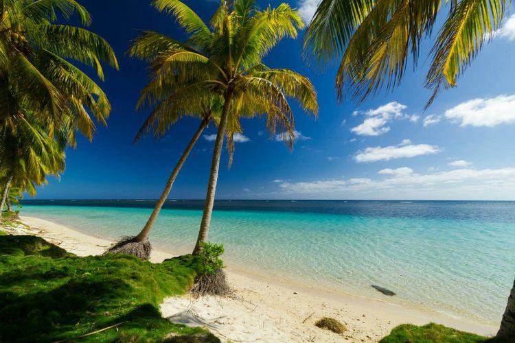 palm-trees-beach-sea-shutterstock_368732687