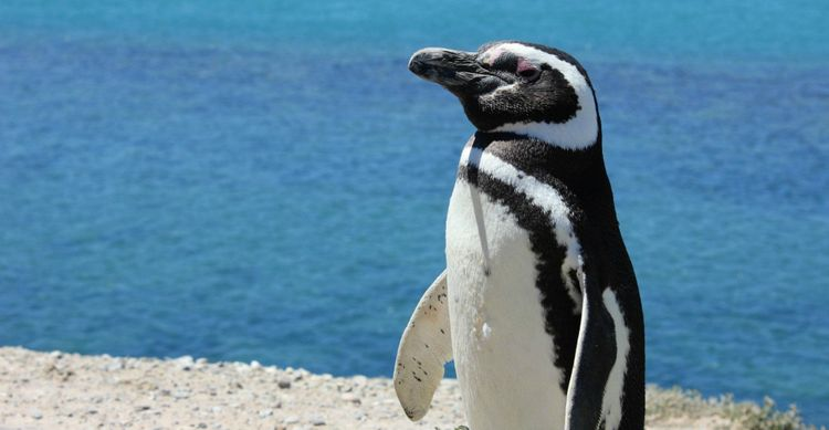 penguin-patagonia-argentina-shutterstock_672143464