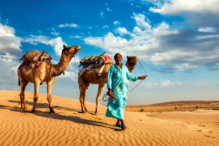 Rajasthan indian camel, India © Dmitry Rukhlenko/Shutterstock
