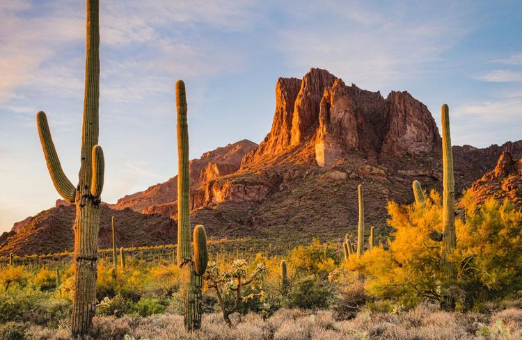 Saguaro-Arizona-shutterstock_1667622979