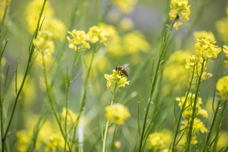 Slovenia bee