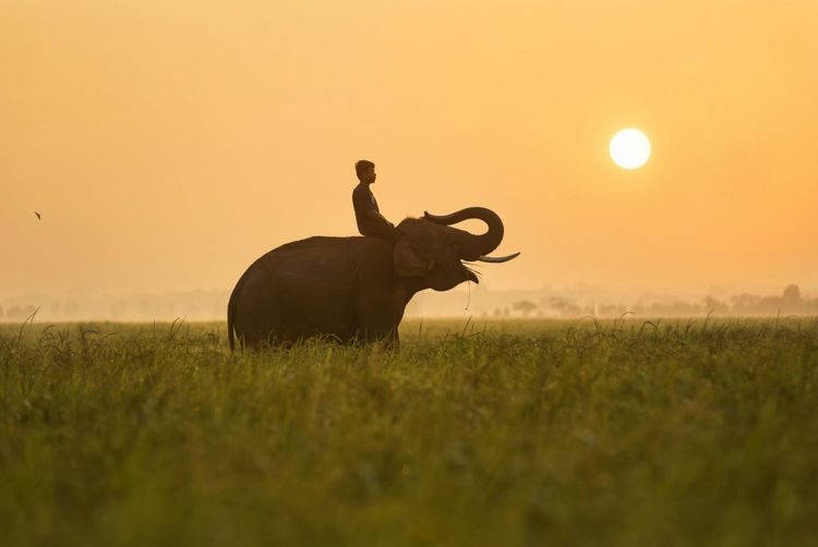 sunrise-happy-elephant-thailand-shutterstock_333784439