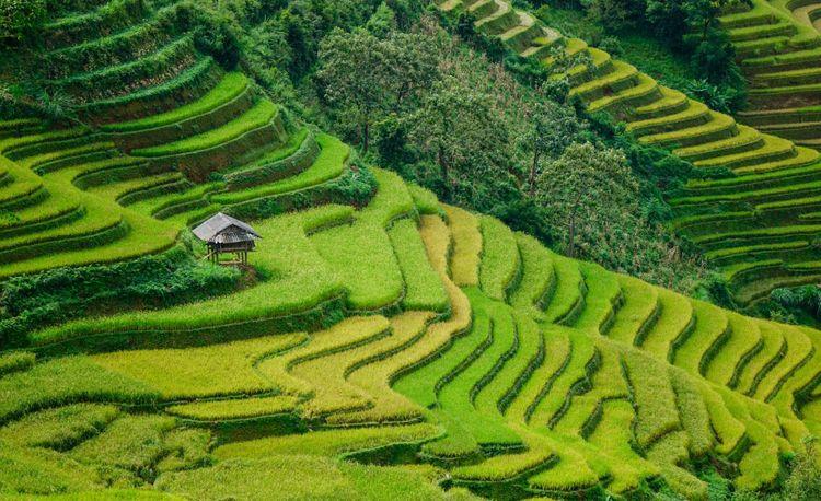 terraced-rice-fields-sapa-vietnam-shutterstock_541224970