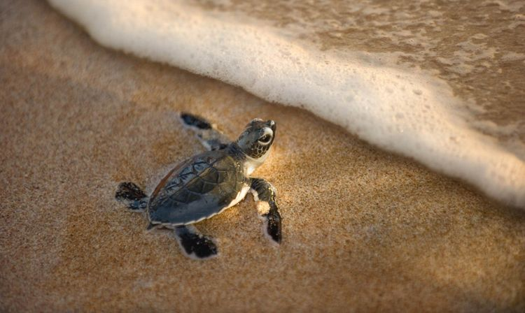 turtle-hatch-shutterstock_91039295