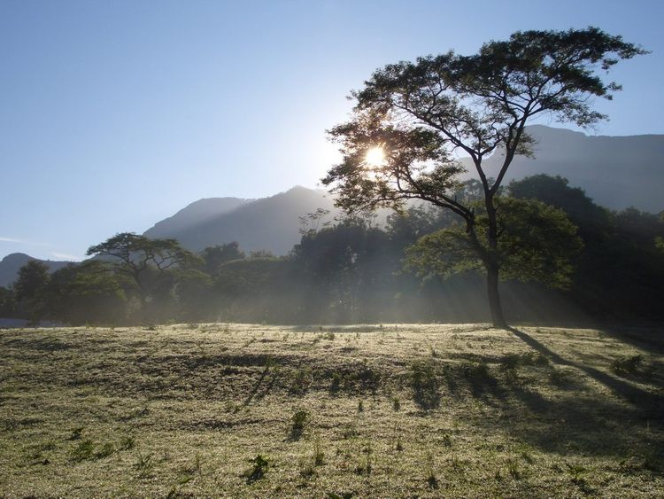 Tanzania woods and mountains