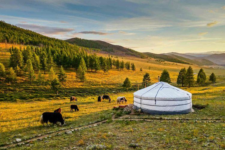 Mongolian yurta