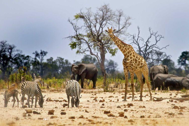 Safari at the Hwange national park, Zimbabwe