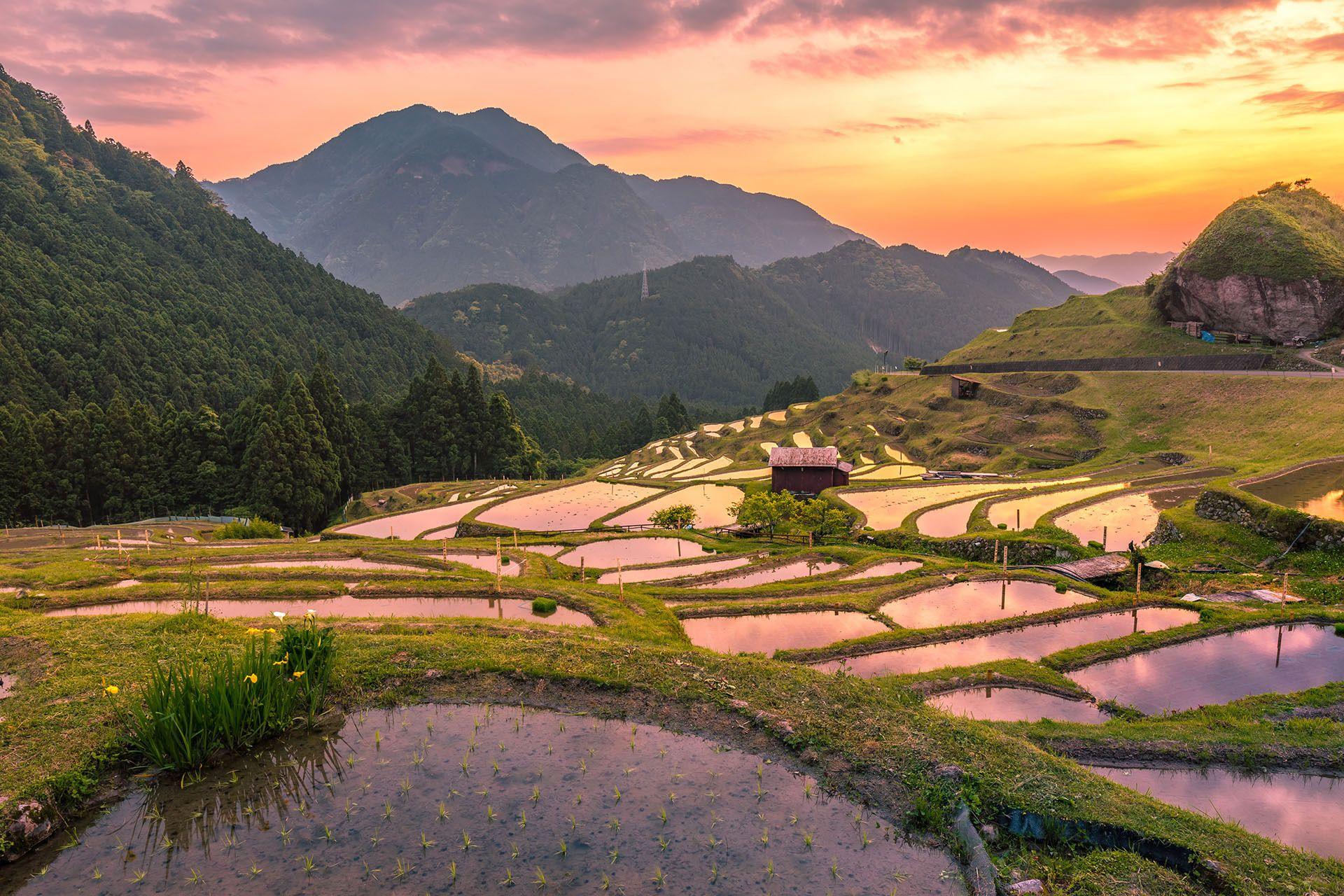 hoàng hôn-lúa-ruộng-và-núi-ở Nhật Bản